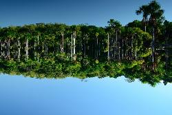 Padurea Amazoniana, Brazilia